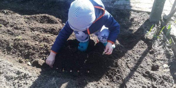 """Повече за нашата инициатива """"Градинар по пижама"""""""